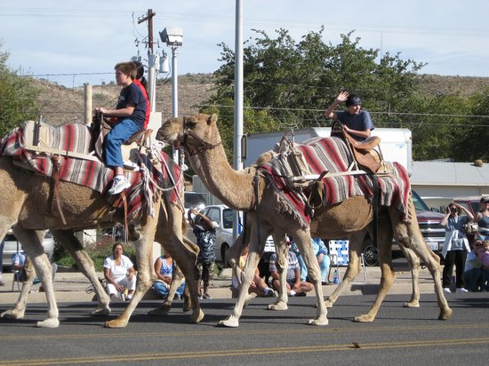Beale Wagon Road Historic Trail : Camel parade in Kingman Beale Road days
