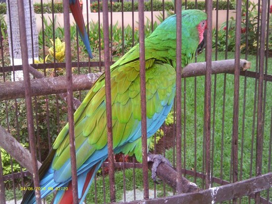 """Villa del Palmar Beach Resort & Spa: One of two colorful """"greeter"""" at the hotel entryway"""