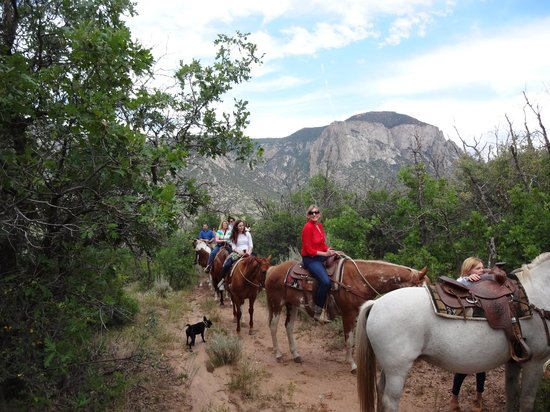Gateway Canyons Resort, A Noble House Resort: Great horses to choose from