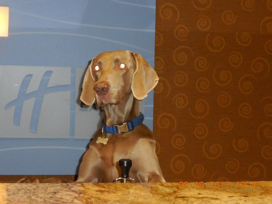 ‪‪Holiday Inn Express Hotel & Suites - Coeur D'Alene‬: Dodger, Guest Services Manager‬