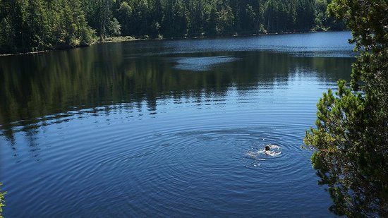 The Sunshine Coast Trail - Day Tours : Swimming in Wednesday Lake
