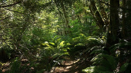 The Sunshine Coast Trail - Day Tours : Old growth forest in Malaspina Provincial Park
