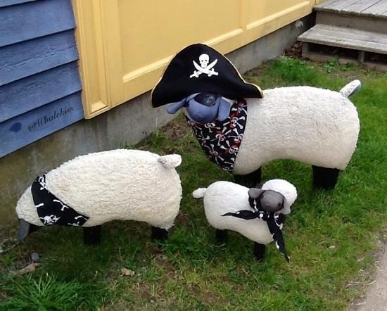 Spruce Top Rug Hooking Studio: Pirate Sheep Pets!