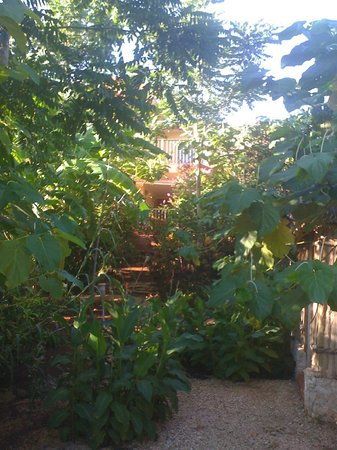 Casa Hamaca Guesthouse: the garden