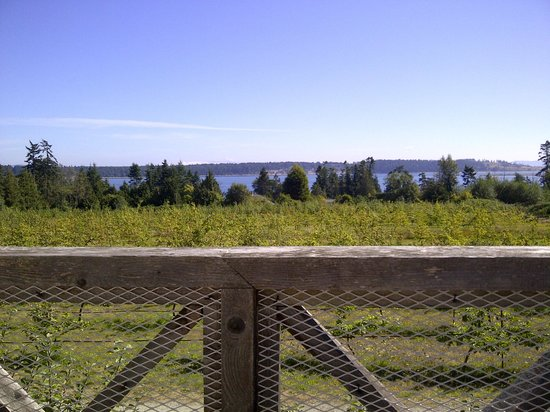 Sea Cider Farm & Ciderhouse : The view from our table