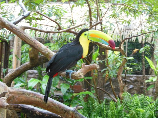 The Springs Resort and Spa: One of the toucan's in the animal preserve (all rescue animals)