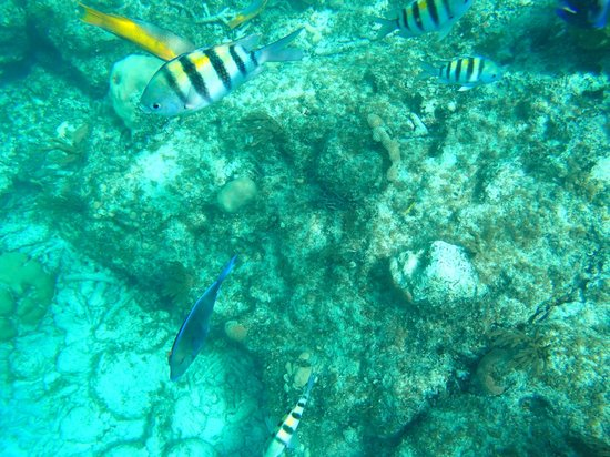Island Seas Resort: Fish are pretty, but what happened to the coral.