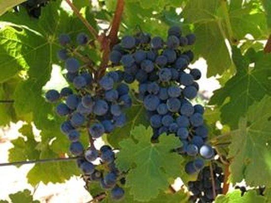 Pride Mountain Vineyards: Detail shot