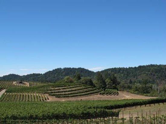 Pride Mountain Vineyards: Beautifully landscaped