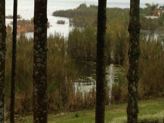 Puri Candikuning Retreat: The lake through the trees...  shot from room.