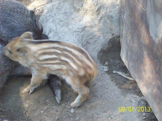 "Parc Animalier d'Introd: il piccolo ""Champignon"""