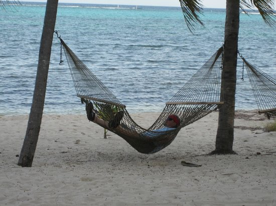 Little Cayman Beach Resort: These hammocks were just a few yards from our little patio.