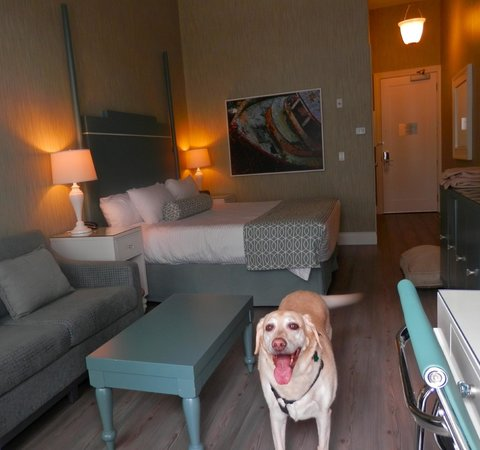 Prestige Oceanfront Resort: My dog loved our room!