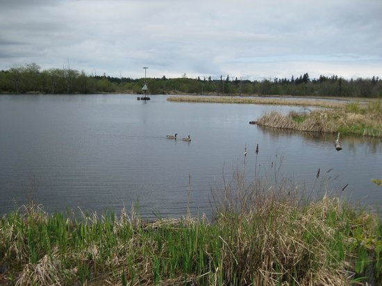 Nanaimo, Canadá: A partial view of the marsh.