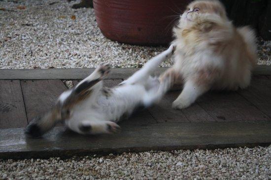 La Ardilena: Mascotas de la Ardileña