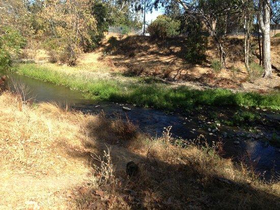 Los Gatos Creek Trail: Los Gatos Creek