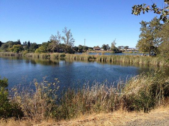 Los Gatos Creek Trail: More lakes