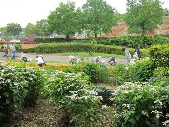 Asamizo Park