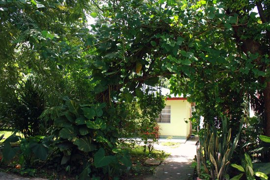 Midas Resort: large ivy growing in archway