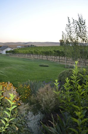 Walla Faces Inns at the Vineyard: View of Vineyards