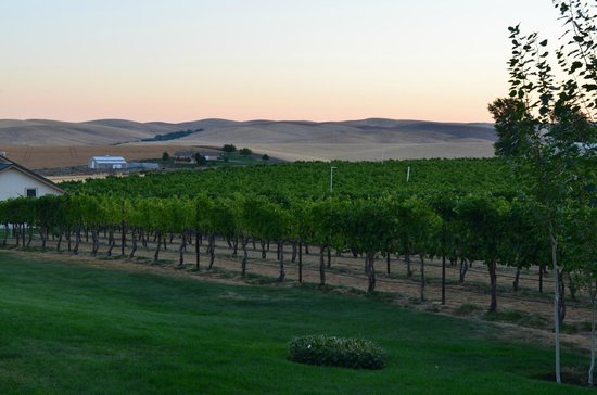 Walla Faces Inns at the Vineyard: View of Vineyards and Hills