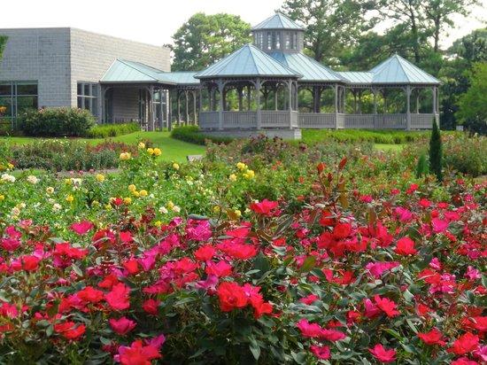 Bicentennial Rose Garden - Picture of Norfolk Botanical Garden ...