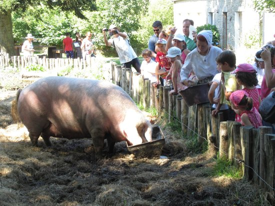 Village de Poul-Fetan: feeding the pigs