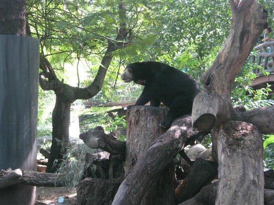 Dusit Zoo: Un oso negro, muy simpatico