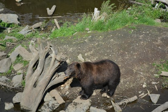 Fortress of the Bear : 4 year old bear