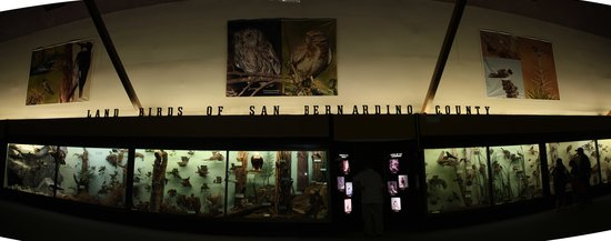 San Bernardino County Museum: Bird display