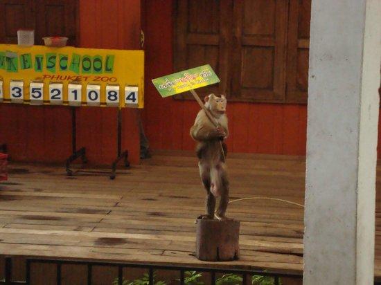 Phuket Zoo : Monkey show