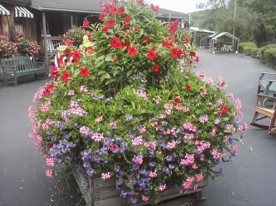 Fly Creek Cider Mill & Orchard: Beautiful flowers