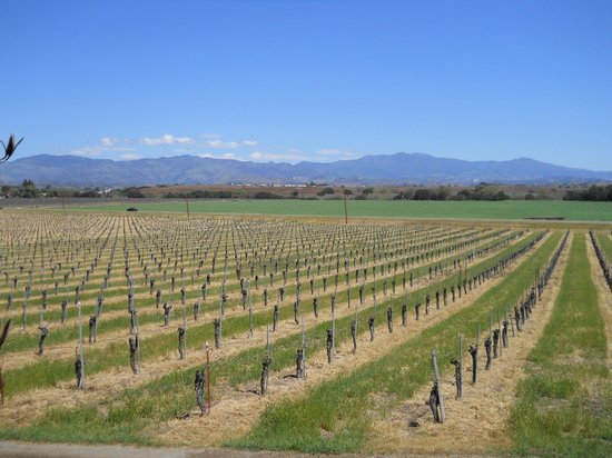 Kalyra Winery: view from the porch