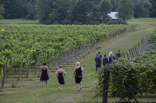 Flag Hill Winery : Wedding party walks among the grapes for photo opportunity