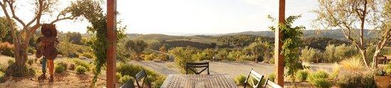 The Inn at Croad Vineyards : View of the vineyard