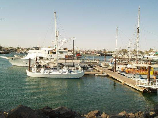 Old Port : Vista diurna de la marina