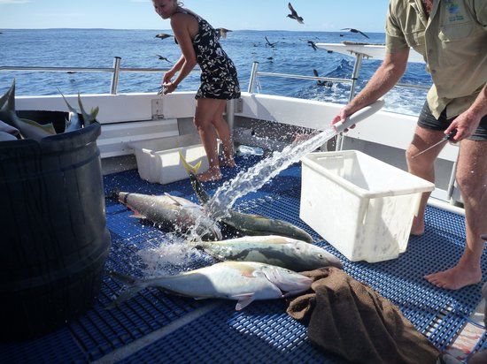 Marine Adventures - Carina Deep Sea Fishing Charters : Preparing to gut and fillet fish - note fish in barrel too