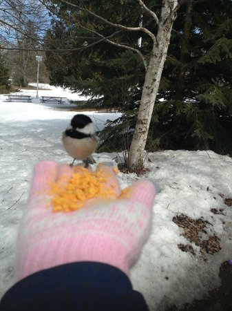 Landmark Resort: Chickadees ate from our hands at Peninsula State Park Nature Center