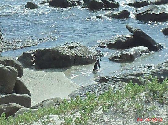 Kayak Cape Town: Lone ranger