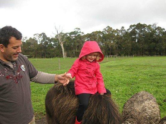 Kerriley Park Farmstay: Farmer Pete and Inga the Water Buffalo