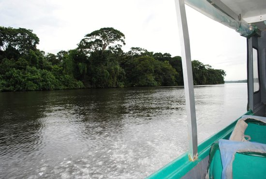Pachira Lodge: Heading to the Lodge (View from Boat)