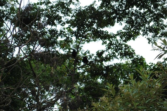 Pachira Lodge: Monkeys