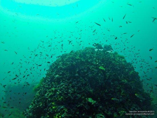 Haad Yao Divers : Koh Phangan