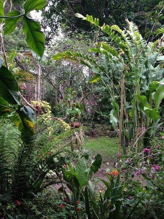 Posada del Bosque Encantado: The garden
