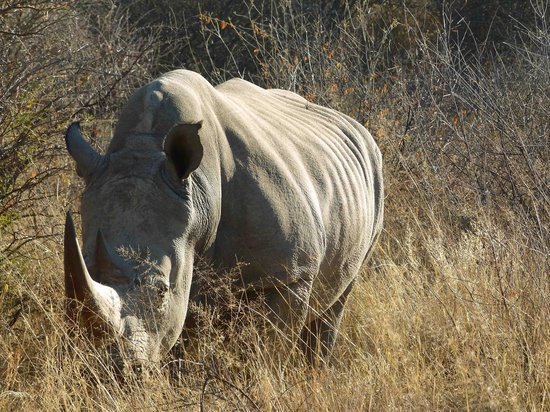 Waterberg Wilderness Lodge: bully