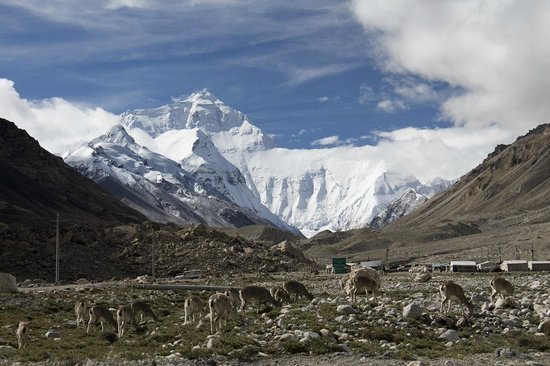 Mt. Qomolangma Nature Reserve: Mount Everest near the base camp