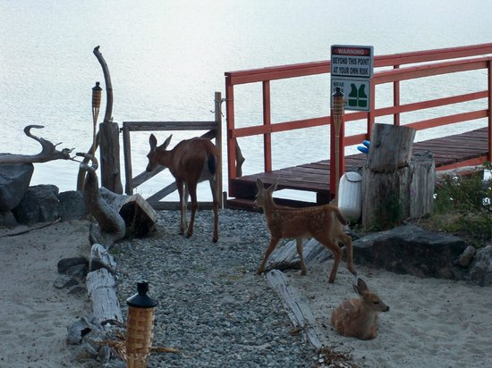 Oceanside Retreat: Deer on the grounds