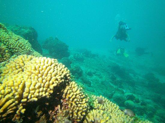 Divers Republic : Blue Bay reef