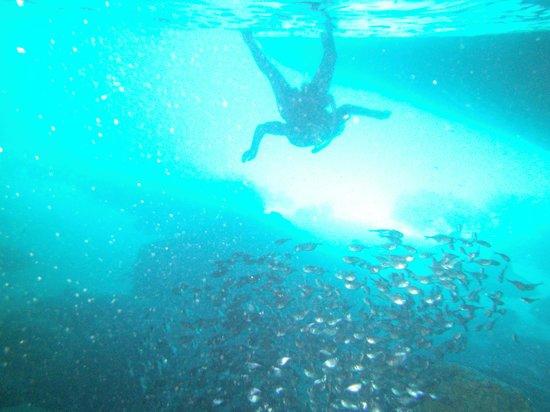 Divers Republic : School of silversides in blue room