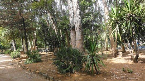 Marechal Carmona Park: Eukaliptusy